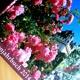 Rosenjahrbuch- Paket