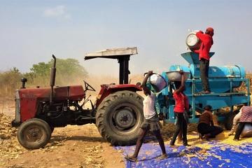 Unabhängige Landwirtschaft in Ghana-Amprofi Farms