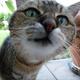 Foto von unseren Katzen mit Autogramm