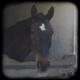 Gutes Karma beim Anblick eines Pferdes / Good Karma whenever you see a horse
