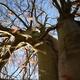 Ein Steckling unseres Baumhaus-Baumes für deinen Balkon/ Garten