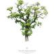 Arboretum-Baumporträts, Einzelportrait, Artprint 50 x 40 cm