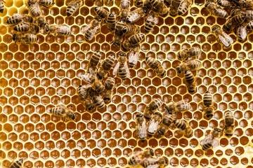 Bienen sichern die Artenvielfalt der Natur
