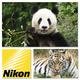 """Gruppen-Fotoworkshop """"Pandas & Co"""" powered by Nikon für max. 4 Personen, inkl. 1 Buch pro Teilnehmer"""